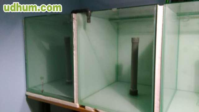 Acuarios de cria for Cria de peces en casa