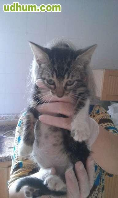 Regalo gatitos de un mes 2 - Gatitos de un mes ...