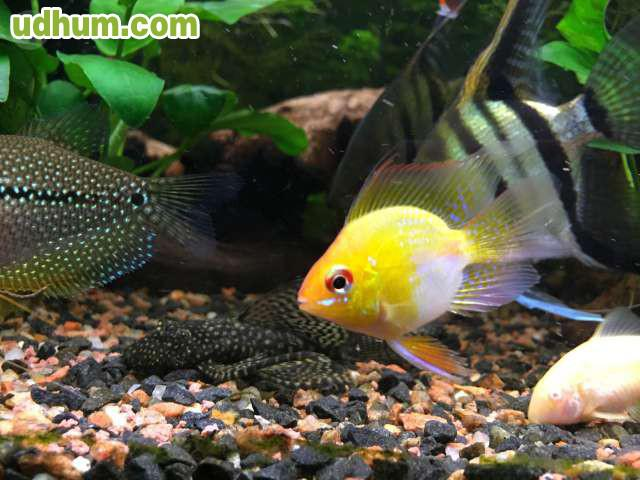 peces variados baratos