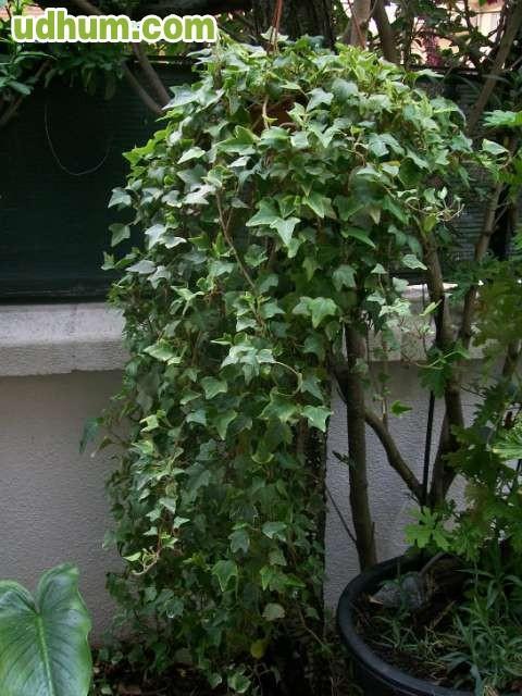 Se venden plantas baratas for Plantas baratas