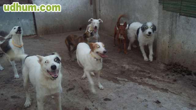 Rehala de perros de caza - Pienso para perros de caza ...