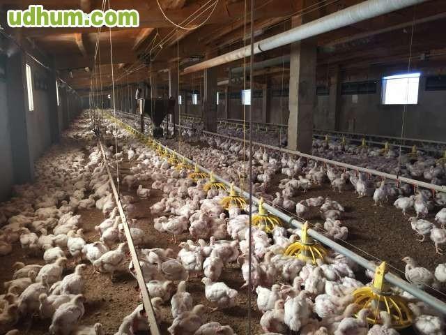 Nave pollos negocio cehegin - Inmobiliaria ortega cehegin ...
