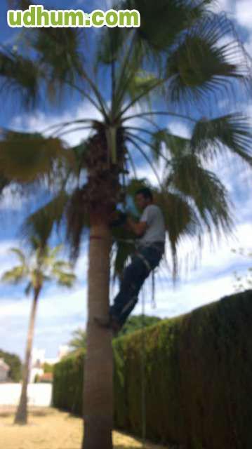 Jardinero busco trabajo 9 - Trabajo jardinero madrid ...