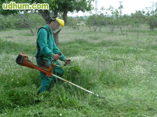 Busco trabajo se ofrece jardinero for Trabajo jardinero