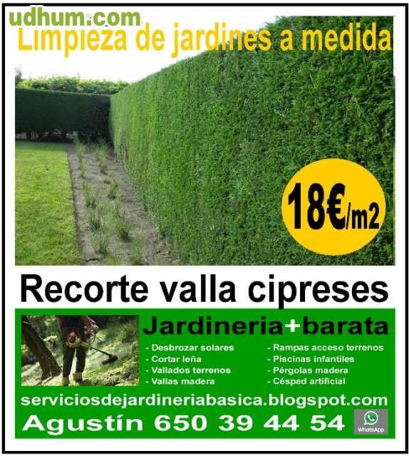 Jardineria barata recorte cipreses for Jardineria barata barcelona