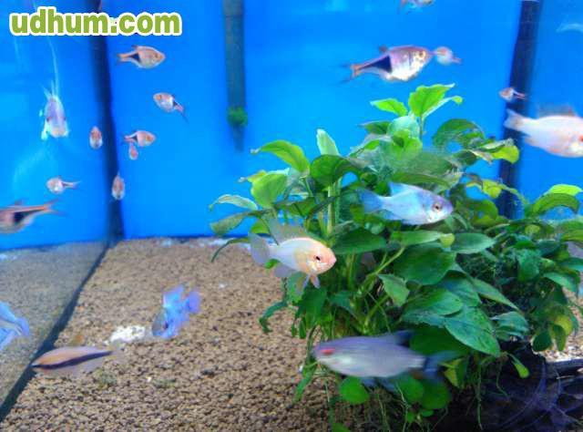 Gran variedad de peces for Variedad de peces
