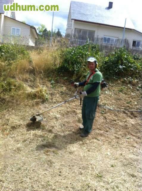 Jardinero corta arisonica hiedra 1 - Trabajo jardinero madrid ...