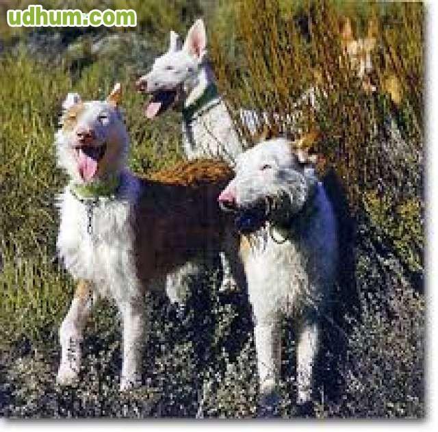 Pienso en croquetas especial caza 2 - Pienso para perros de caza ...