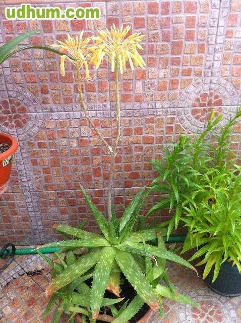 Vendo flores bonitas sanas baratas for Plantas jardin baratas