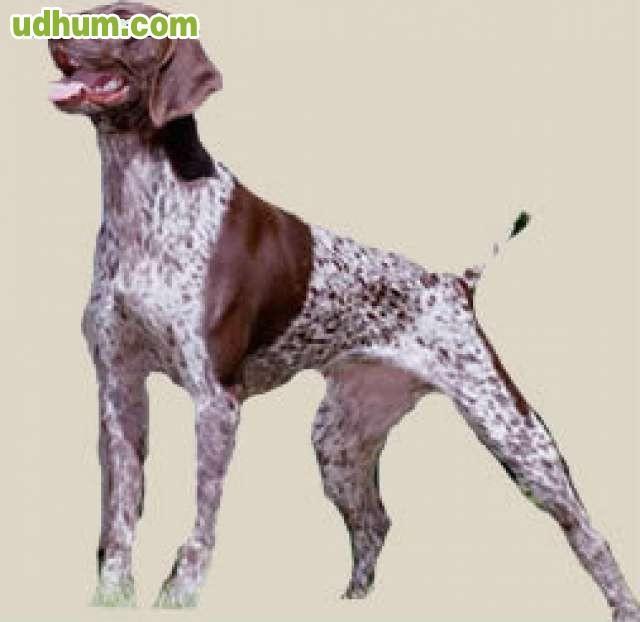 Pienso para perros de caza desde 7 95 - Pienso para perros de caza ...