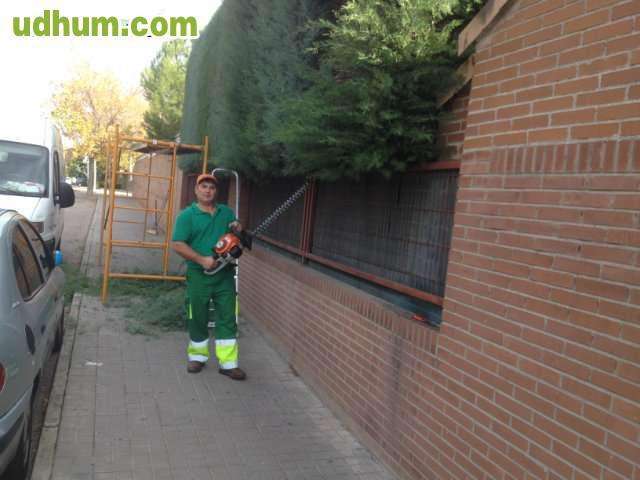 Se corta arizonica yedra for Se necesita jardinero