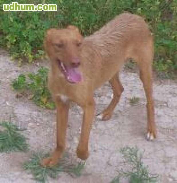 Perros de caza regalo sevilla codigos descuento zalando noviembre 2018 - Milanuncios muebles valladolid ...