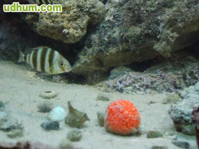 Roca viva para acuario marino 3 for Acuario marino precio
