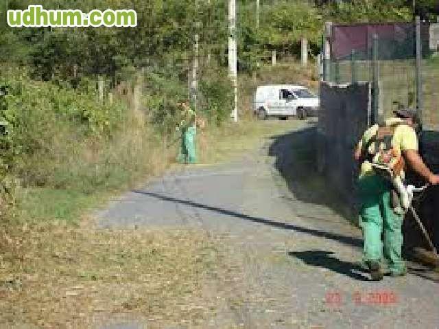 Jardineria y poda 1 - Trabajo jardineria madrid ...