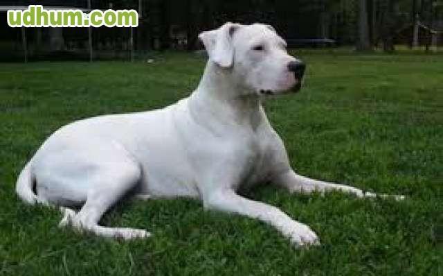 Pienso en croquetas especial caza 1 - Pienso para perros de caza ...