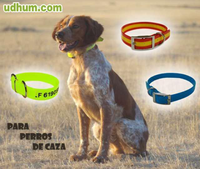 Biothane para perros de caza - Pienso para perros de caza ...