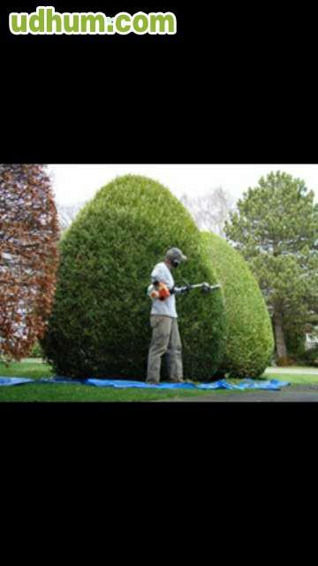 Trabajos de jardiner a y tala de rboles for Arboles jardineria