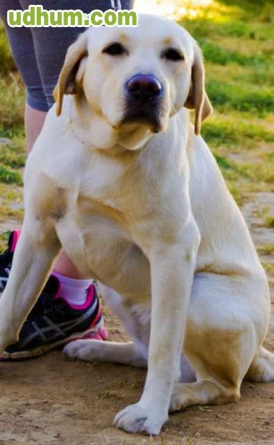 Guarderia adiestramiento pienso perros - Pienso para perros de caza ...