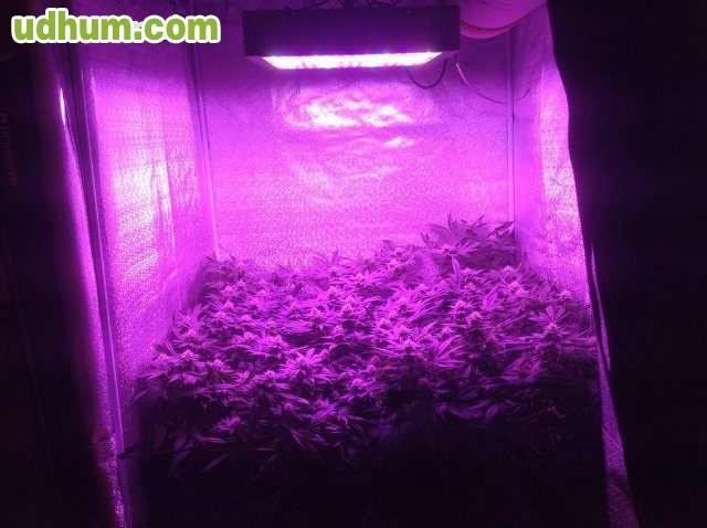 Led cultivo interior 900w 180x5w grow for Leds para cultivo interior