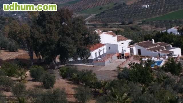 Parcela de olivos con casa piscina for Piscina nueva jarilla