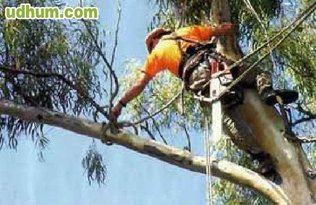 Jardinero particular en moraleja madrid - Trabajo jardinero madrid ...