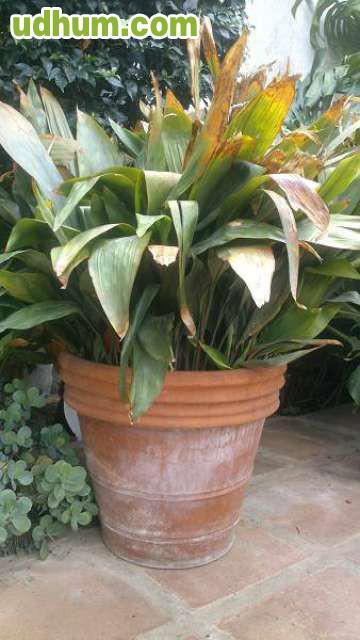 Muchas plantas muy baratas for Plantas baratas