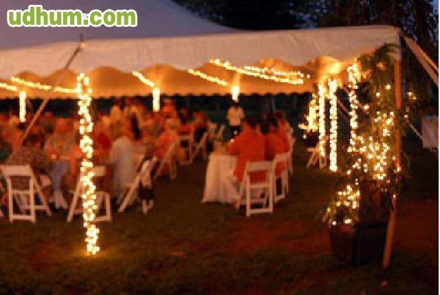 Iluminacion para bodas navidad for Iluminacion para palmeras
