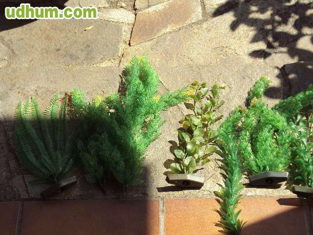 Accesorios para acuarios 3 for Vendo plantas ornamentales