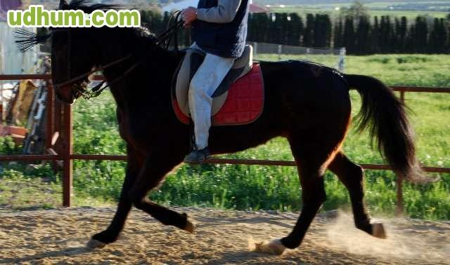 Vendo caballo franc s - Caballo silla frances ...