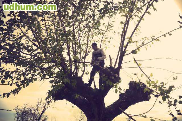 Busco trabajo se ofrece jardinero - Trabajo jardinero madrid ...