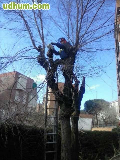 Jardinero profesional 10 - Trabajo jardinero madrid ...