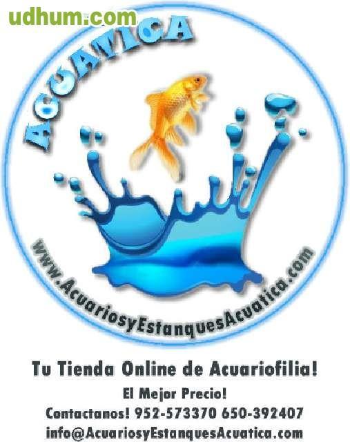 Alimento peces agua fria estanque kois for Peces de estanque de agua fria
