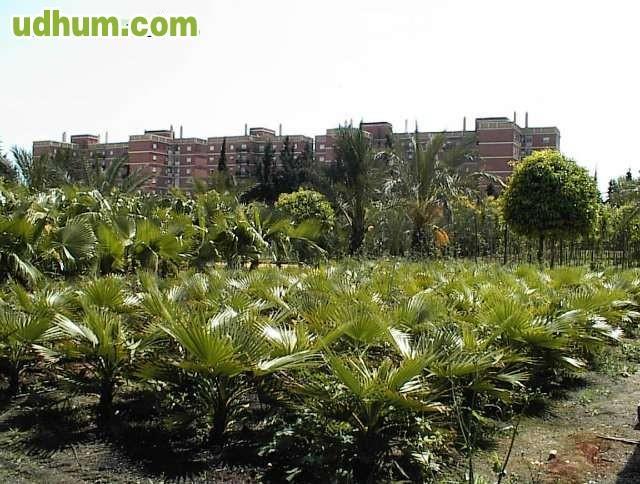 Vivero plantas garden center - Garden center sevilla ...