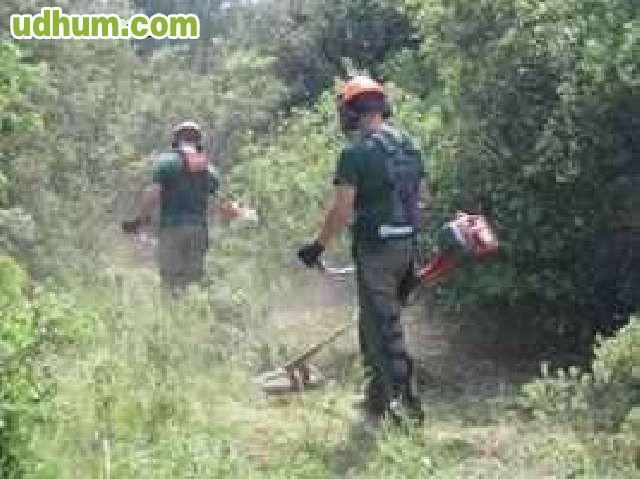 Empresas de jardiner a poda tala for Empresas de jardineria en girona