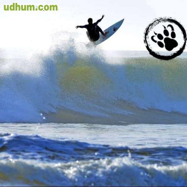 Fabricacion de tablas de surf tiger 12 - Tablas de surf personalizadas ...