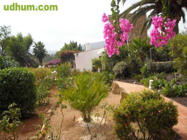 Jardineria y limpieza en ibiza baleares for Se necesita jardinero
