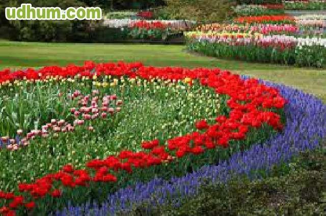 20 a os de experiencia jardinero for Busco jardinero