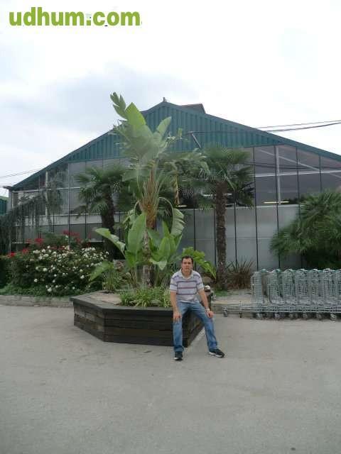 Manteniment de jardins tlf 660 31 06 86 1 Trabajo jardinero girona