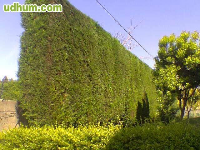 Jardinero titulado con experiencia 8 5e for Cercados jardin