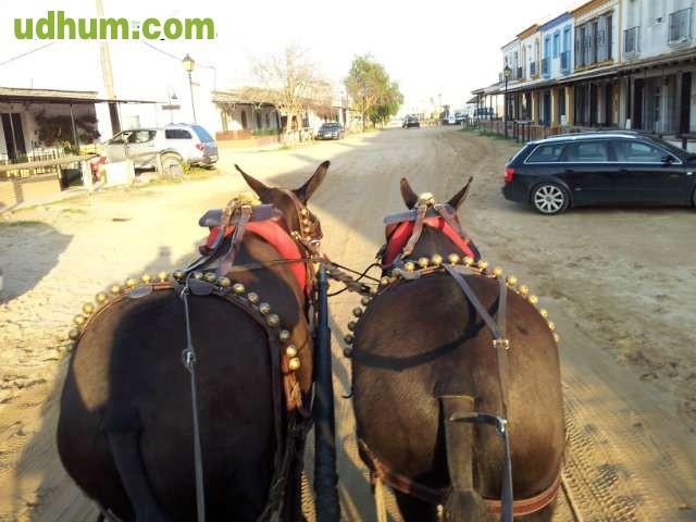 Tronco de las mejores mulas negra for Mulas mecanicas baratas