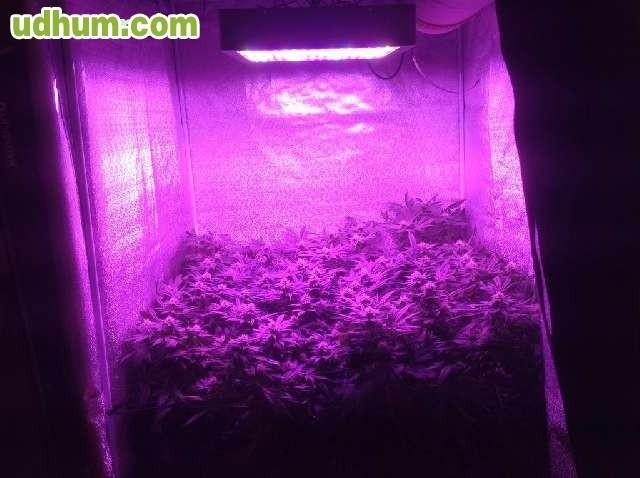 Led cultivo interior 1200w 240x5w grow - Cultivo interior led ...