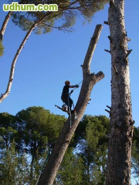 Trabajos de jardineria en valencia - Jardineria villanueva valencia ...