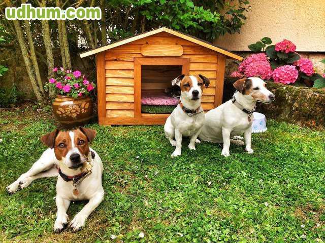 Casetas de perro en madera - Casetas para perros ...