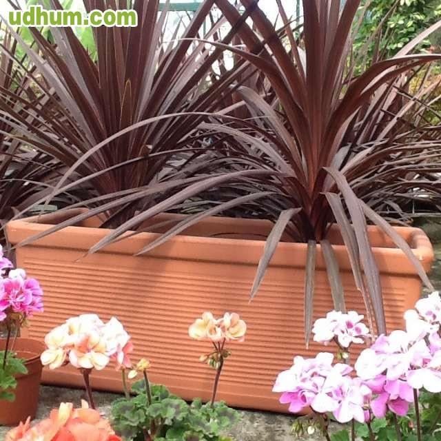 Jardineras de pl stico tipo resina - Tipos de jardineras ...