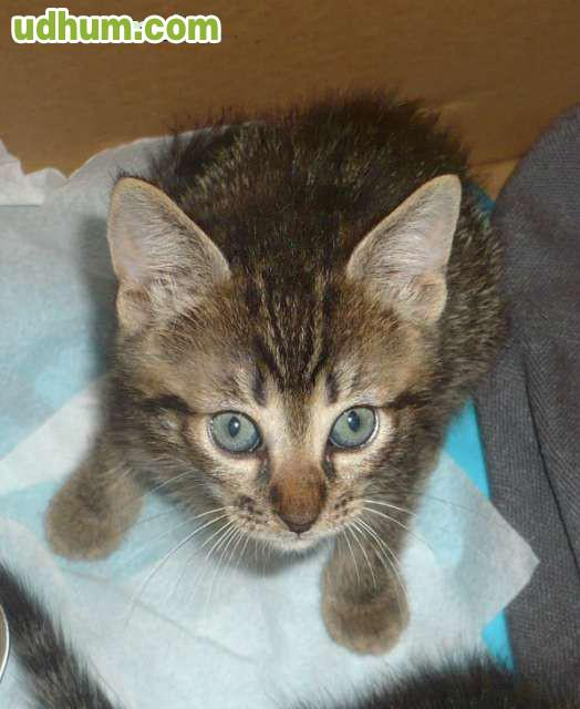Gatito de 2 meses en adopci n - Gatitos de un mes ...