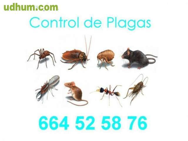 Control de plagas 31 for Control de plagas badajoz