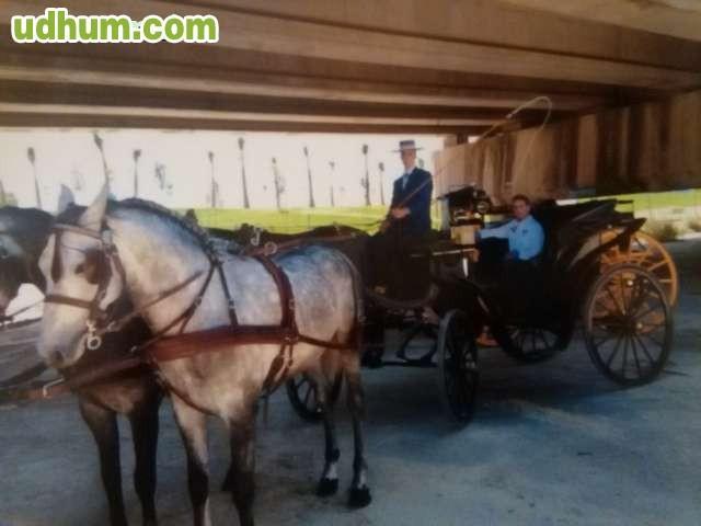 Alquiler de coches de caballo para feria for Tresillos sevilla