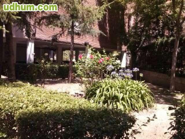 Jardinero y jardines bajo manteniminento for Jardines de bajo mantenimiento